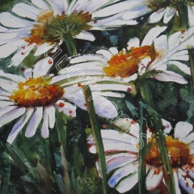 Marguerites- 23 x 23 cm- 130€- Juillet 2012