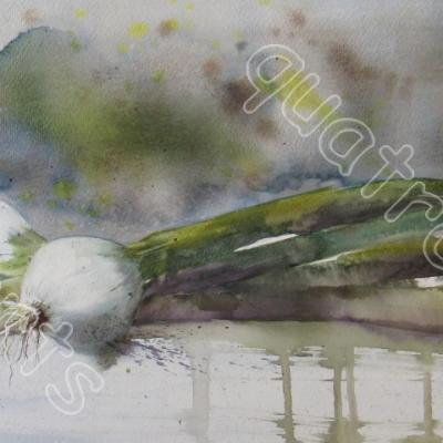 Les oignons blancs- COLLECTION PRIVEE