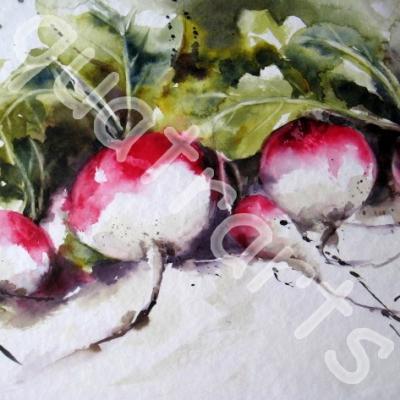 Les radis du potager. ..20x30 cm- Juillet 2014.
