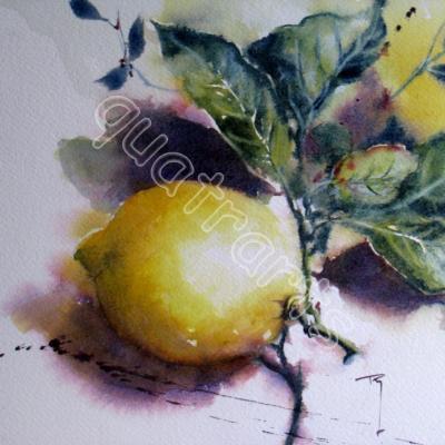 Solo citron- 22x28 cm- 60€- Février 2016